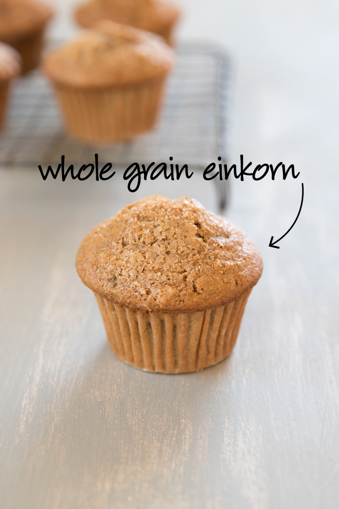 whole_grain_einkorn_spiced_apple_muffin